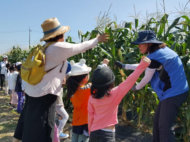 농업기술센터-성남시민농원에서 지난해 7월 열린 옥수수 따기 체험 행사 때
