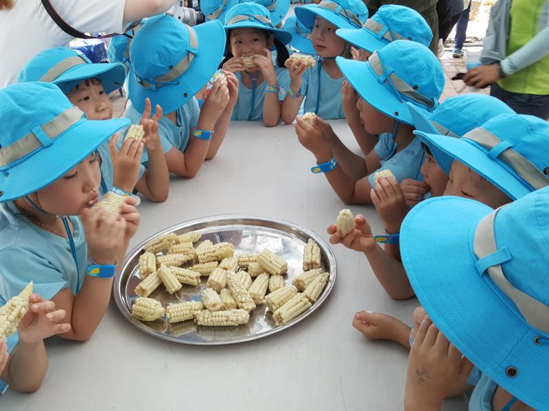 농업기술센터-성남시민농원에서 지난해 7월 열린 옥수수 따기 체험 행사 때 시식